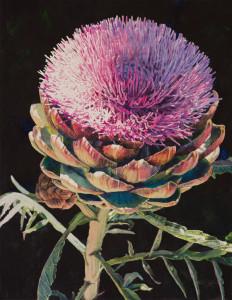 Lisa-Jefferson,watercolors,Artichoke-Blossom,watercolor,beautiful,artichoke-flower
