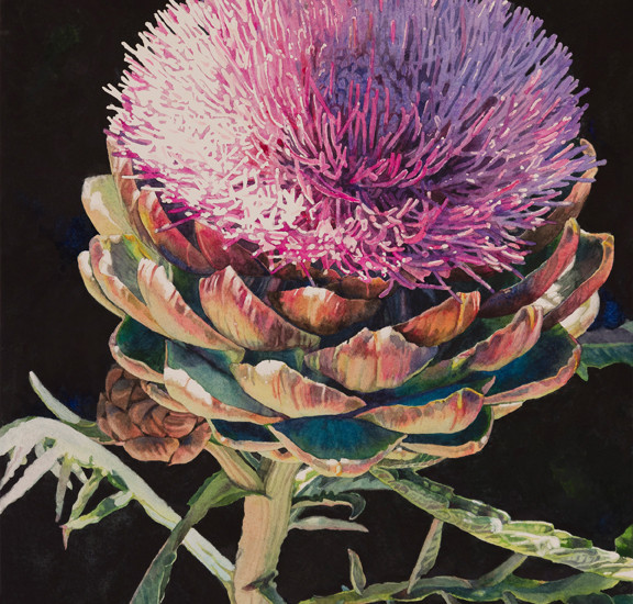 Lisa-Jefferson,watercolors,Artichoke-Blossom,watercolor,beautiful,artichoke-flower