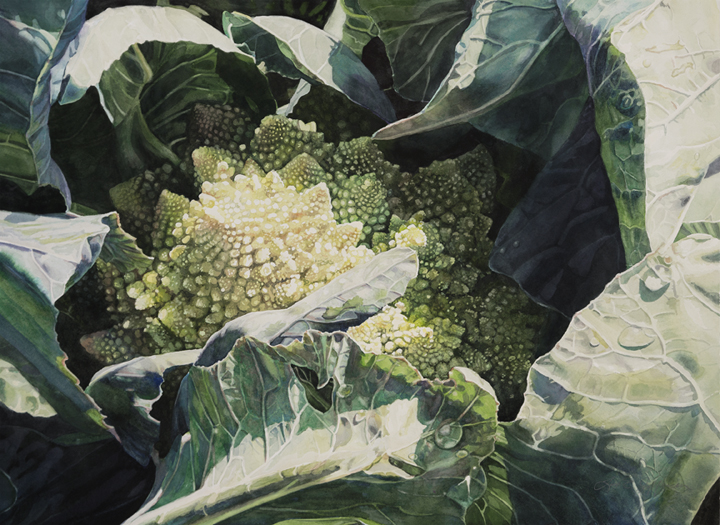 Lisa-Jefferson,watercolors,Romanesco,watercolor,cauliflower