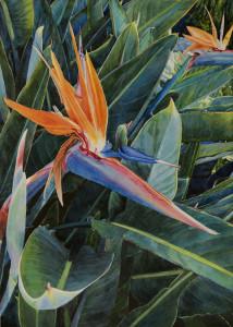 Lisa Jefferson, Almost-Paradise, watercolors, beautiful watercolor, Bird Of Paradise flower
