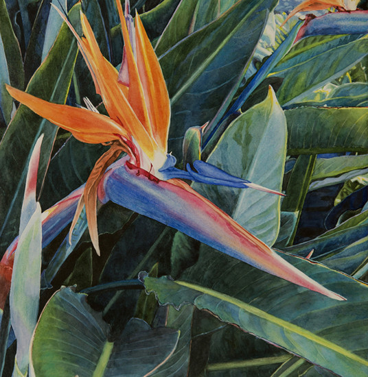 Lisa Jefferson, Almost-Paradise, watercolors, beautiful watercolor, Bird Of Paradise flower