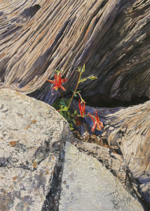 Lisa-Jefferson,Between-A-Rock,watercolor,columbine