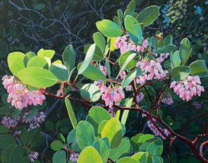 spring manzanita flowers